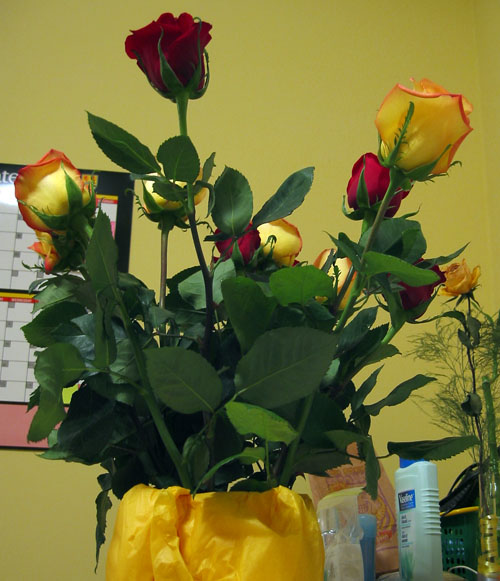 A dozen roses in a milk carton.