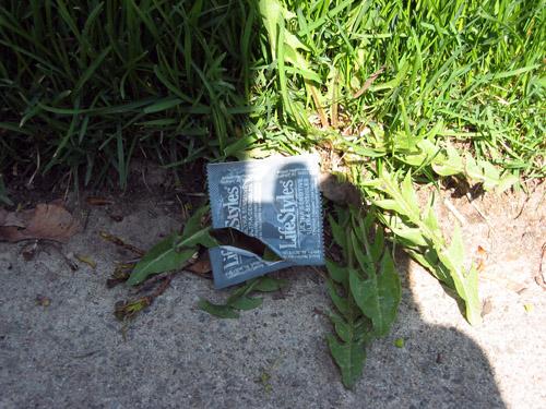 A Condom at Yonge and Eglinton.