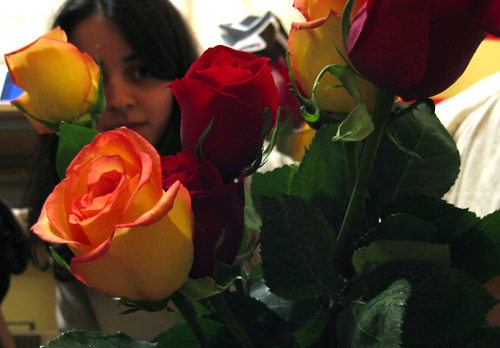 Some red and yellow roses I bought for Shima.