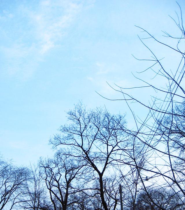 The trees on my street.