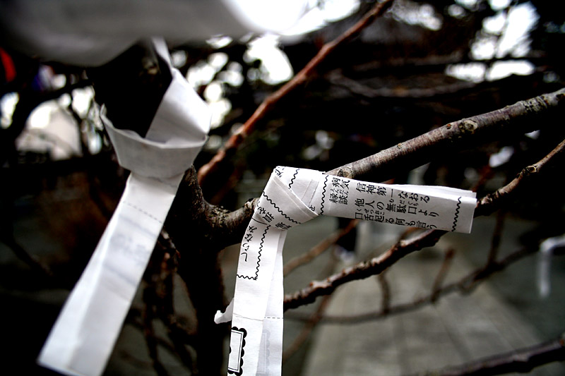 A paper wish tied to a tree.